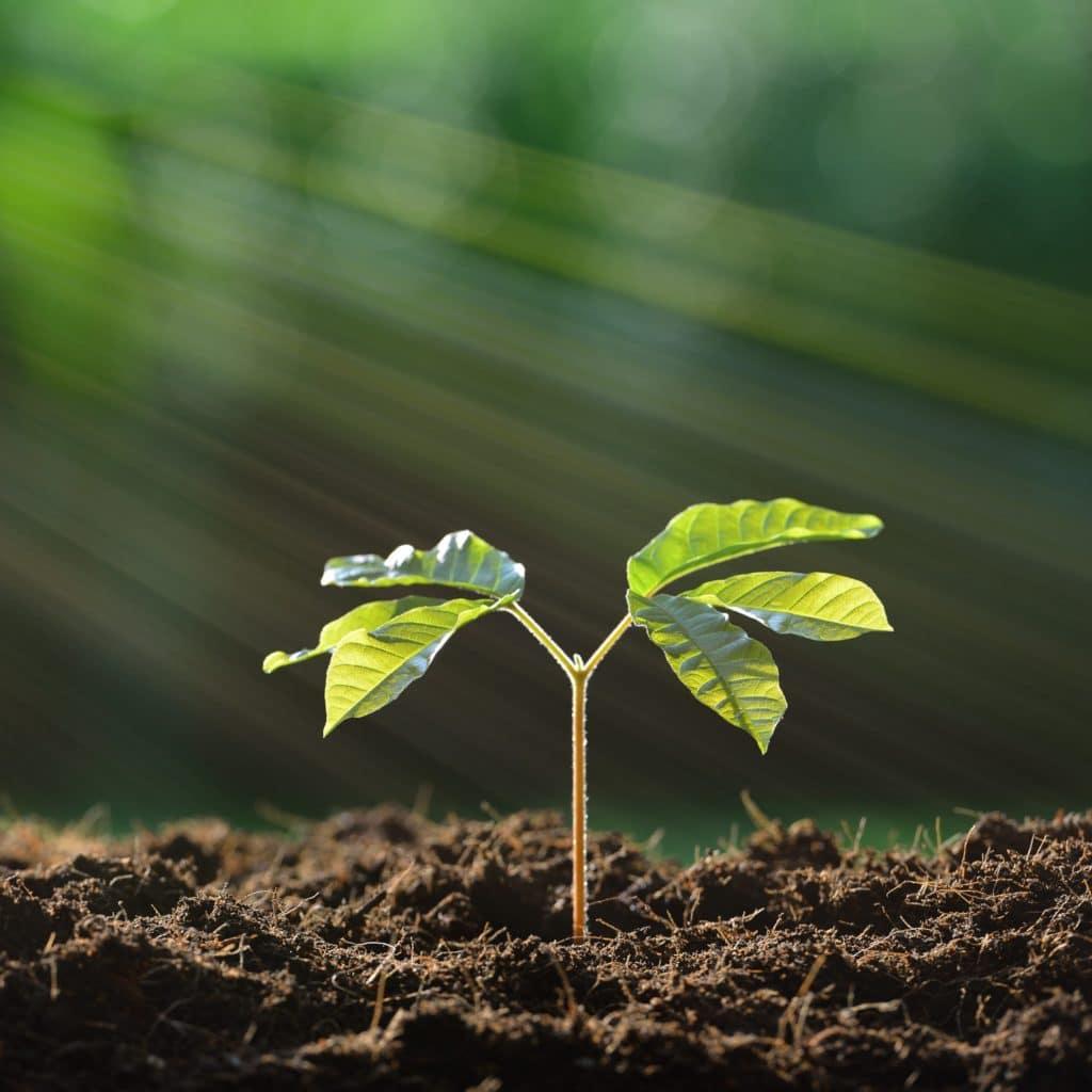LairiaL luminaires biosources et ecoresponsable. LairiaL.eu